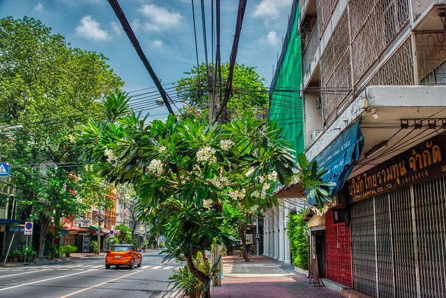 Flowering tree and cables on Maha Chai road on Rattanakosin island (Old Town) in Bangkok, Thailand