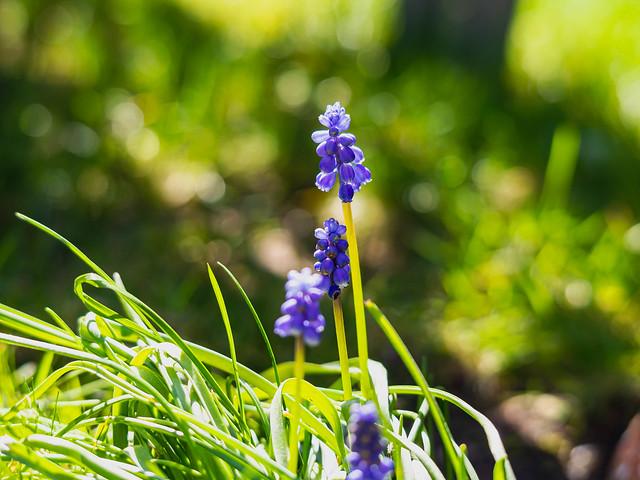 Das Blau vom Band des Frühlings ;-)