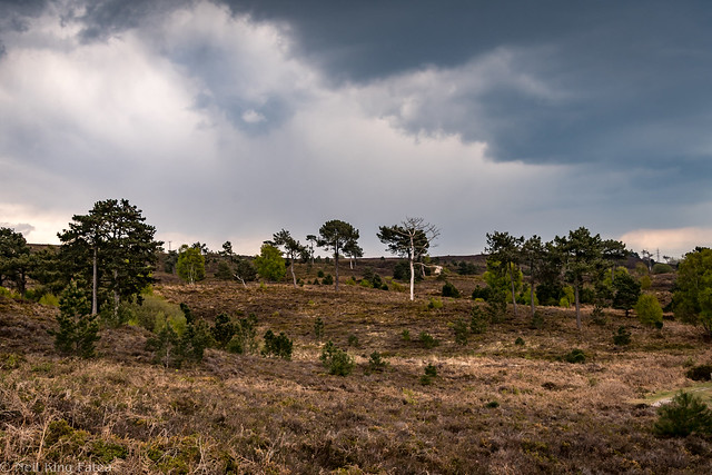 Canford Heath - Photocredit Neil King -5