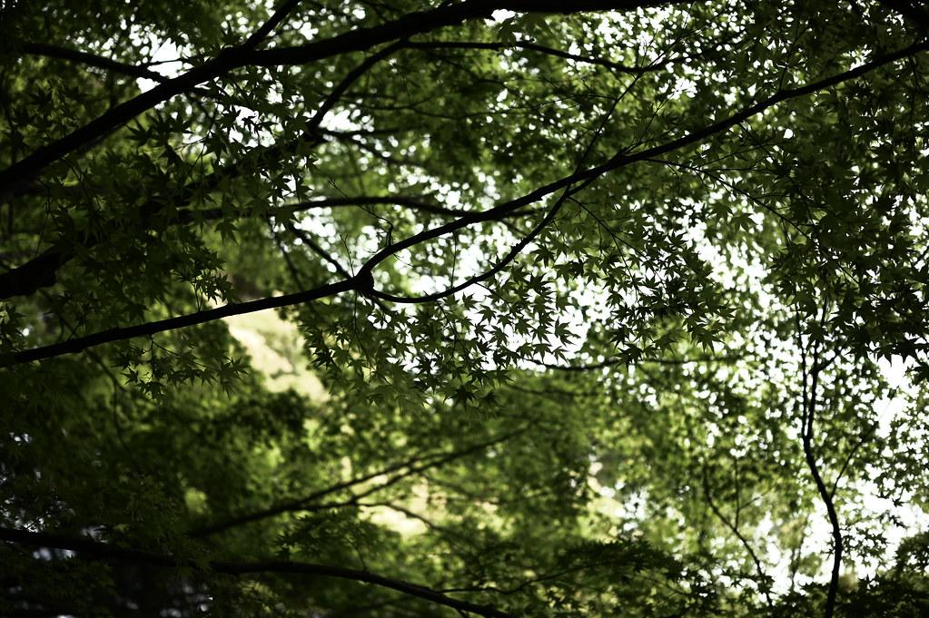 新緑の天授庵庭園