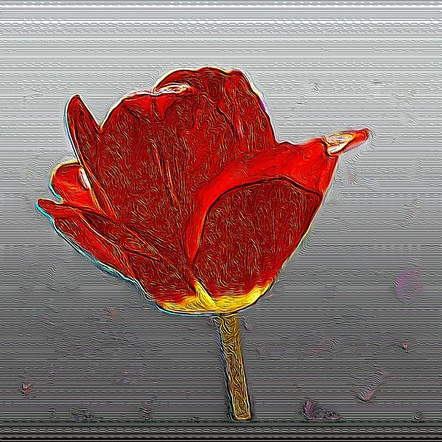 Toronto Ontario ~ Canada ~ Edwards Gardens ~ Botanical Garden ~  Impression of a  Tulip