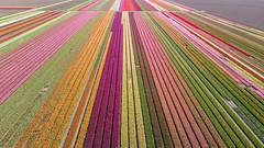 Color lines ...