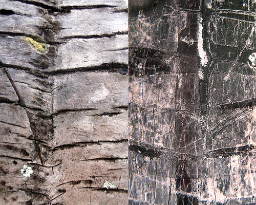 abstract diptych combining a macro of cracked palm bark with weathered and cracked tape on a black lamppost