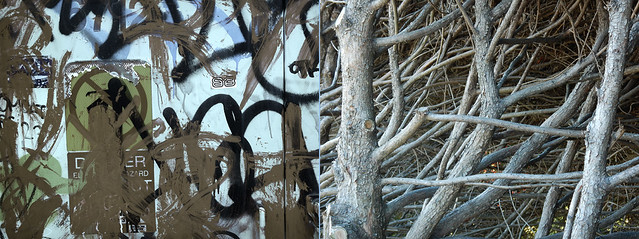 abstract diptych combining graffiti on a wall with the exposed branches of an overpruned cedar hedge