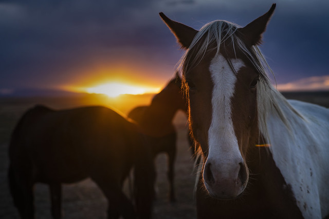 Horse at Sunset (Explore 5/3/2021)