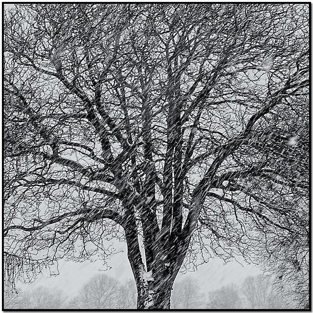 Blizzard | Aalborg, Denmark