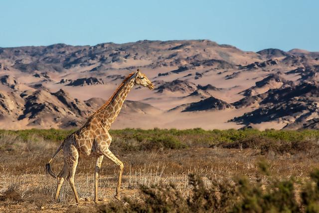 Walking the desert