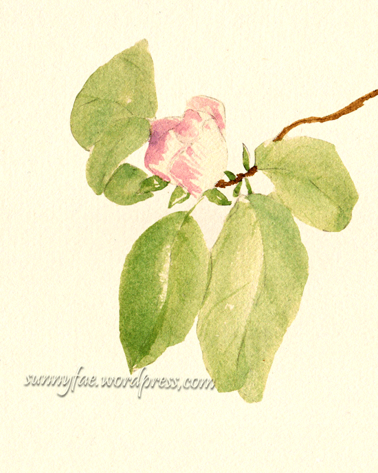 small quince tree flower