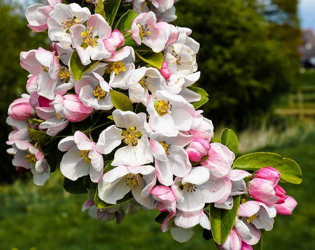 Goodbye Blossom