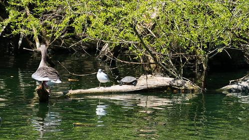 Shared sunbathing - three on the log