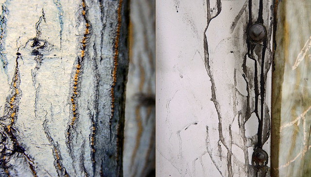 abstract diptych combining trees with white-striped bark with a white pipe dripping with black paint