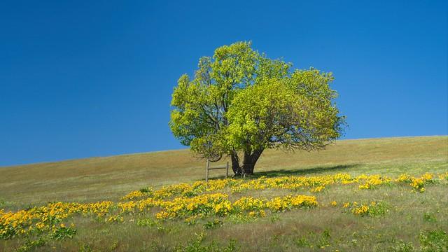 Lone Tree Wildflowers 3129 A