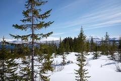 Invasive speices in Arctic Norway