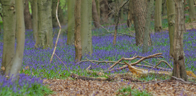 Woodland Colours (spring)