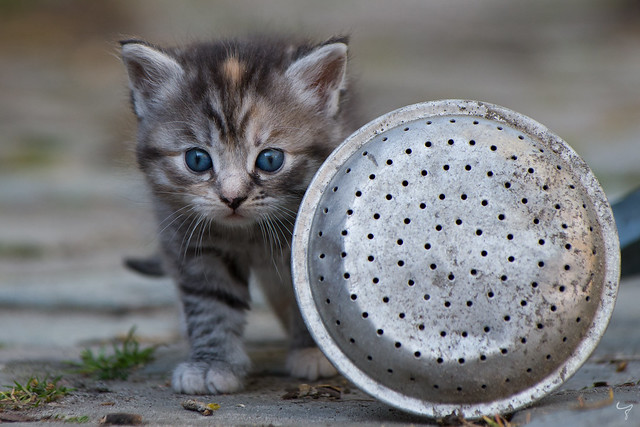 Kitten playing in the garden