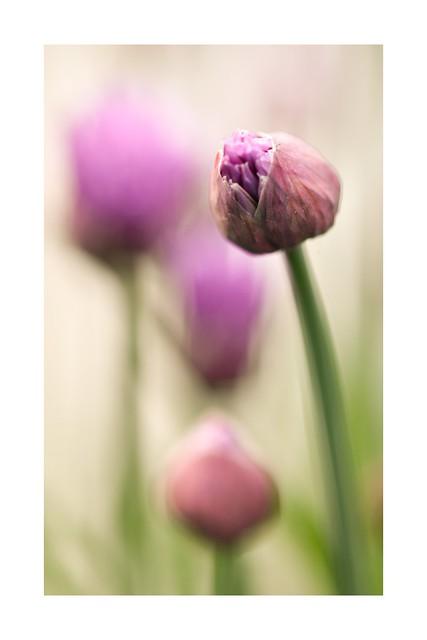 No hay que confundir estar en la flor de la vida...con ser un capullo.
