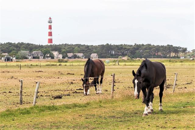 Ameland: vuurtoren / lighthouse.