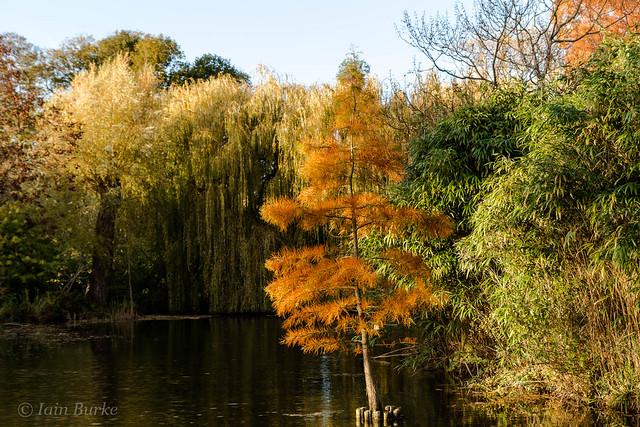 Cambridge University Botanic Garden