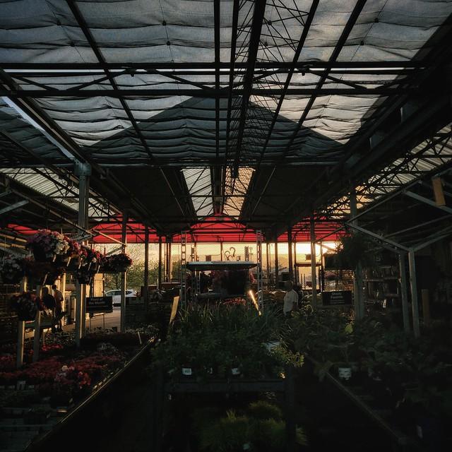 plant store serenade