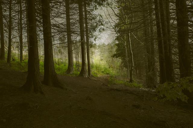 forest walk ICM