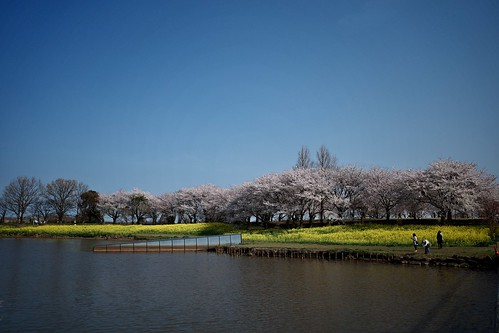 Sakura memories 2021 4