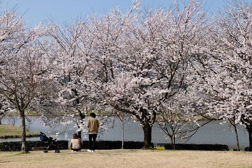 Sakura memories 2021 5