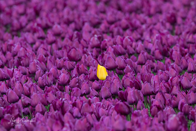 Stand out among the rest