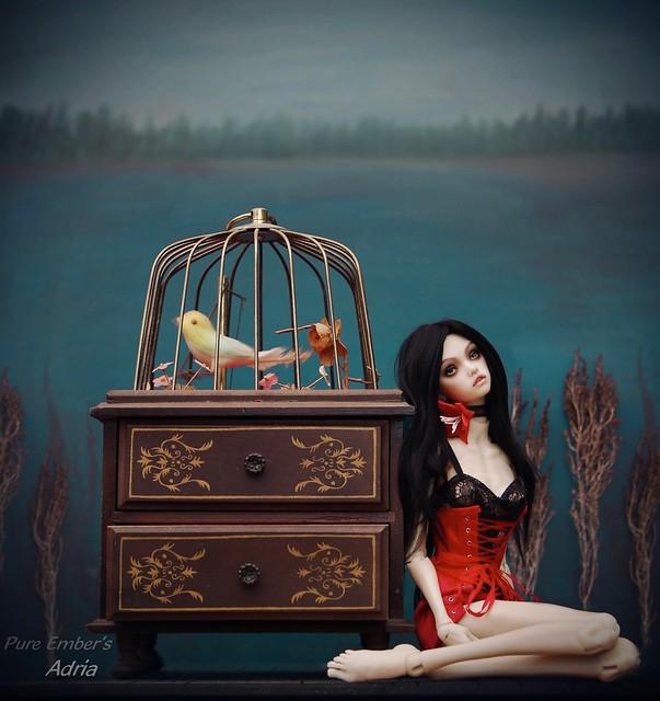 Music box 🐦