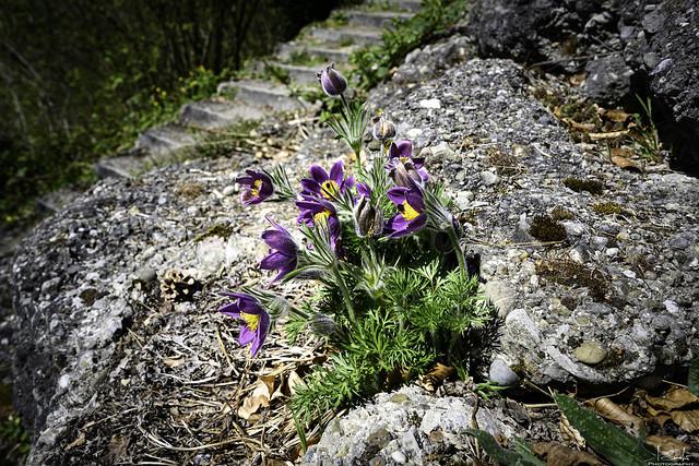 Spring time in Stein am Rhein - Schaffhausen - Switzerland