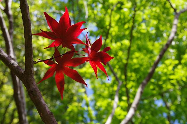 Red, Kamakura, Japan (In Explore)