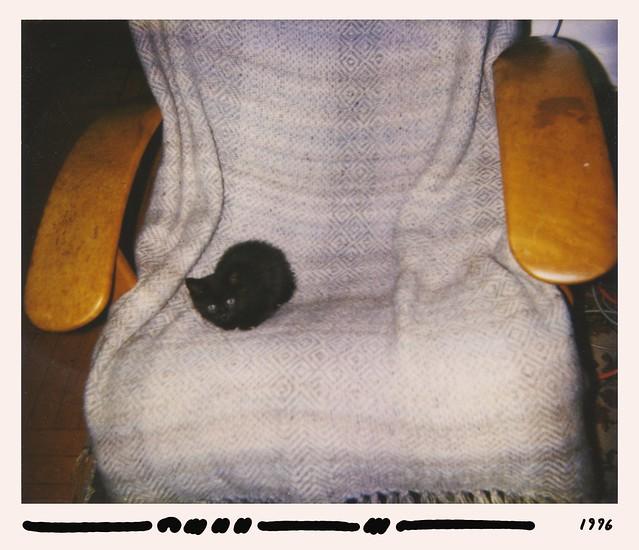 Martin Loeffler, 1996, Toronto — Kitten at Eight Weeks