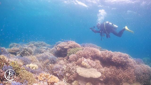 極上サンゴがもりもり過ぎて一生潜ってられるポイントです♪