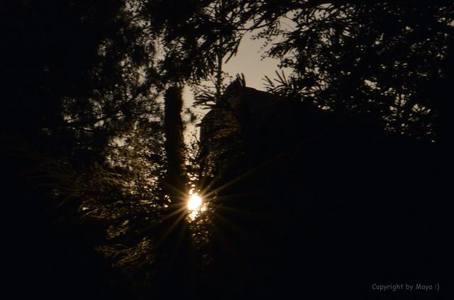 Erwischt, der letzte Sonnenstrahl des Tages * Caught, the last sunbeam of the day * Atrapó el último rayo de sol del día *   .    _DSC2681-001