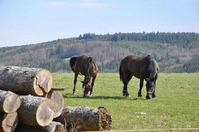 Niederösterreich Wachau Mauternbach_DSC0144