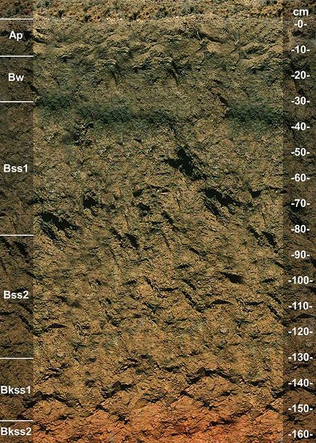 Hollister soil series OK