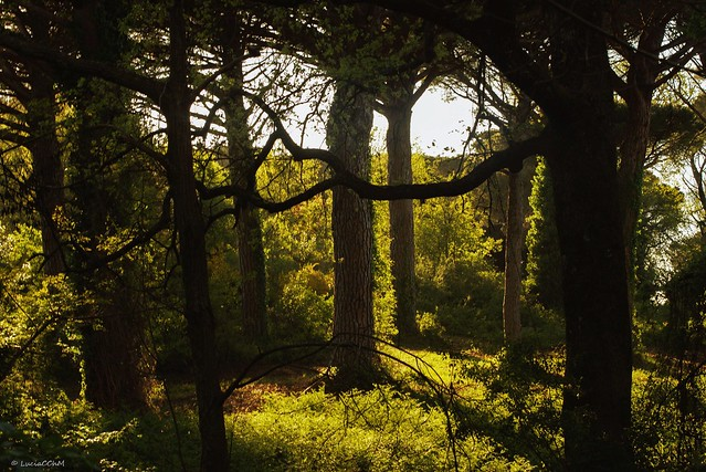 Trees circle - Inside the forest