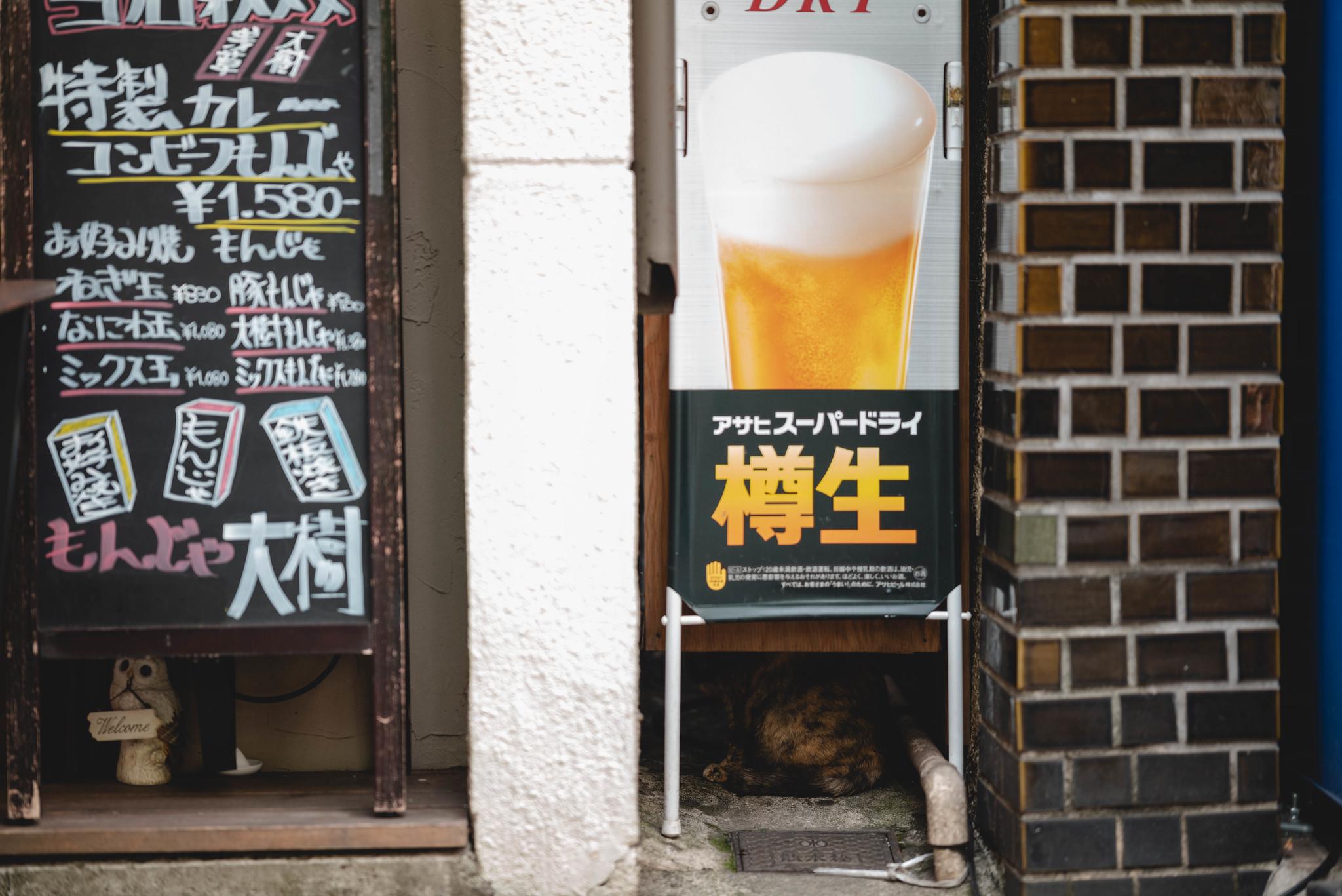 cat in hide and seek