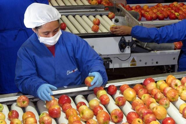 Omil Coltauco realiza positivo balance de colocaciones laborales 2020-2021