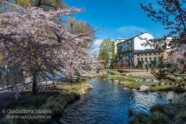 Spring in Norrköping, Sweden