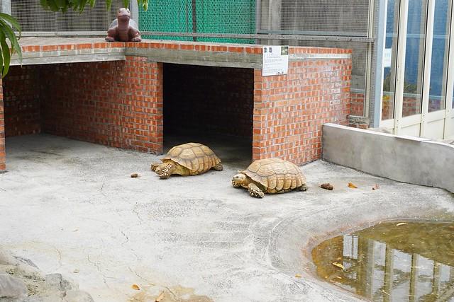 三隻小豬觀光農場