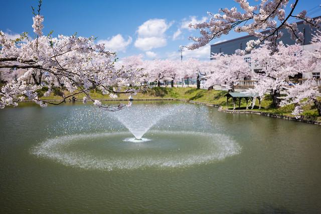 Sakura World