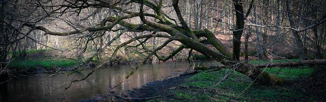 Spring - Radunia river