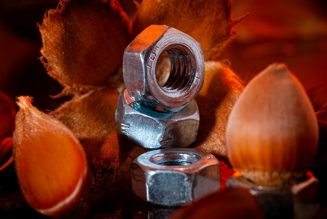 Nuts, nuts, nuts ... Beechnut, Hazelnut and metal nut - My entry for todays
