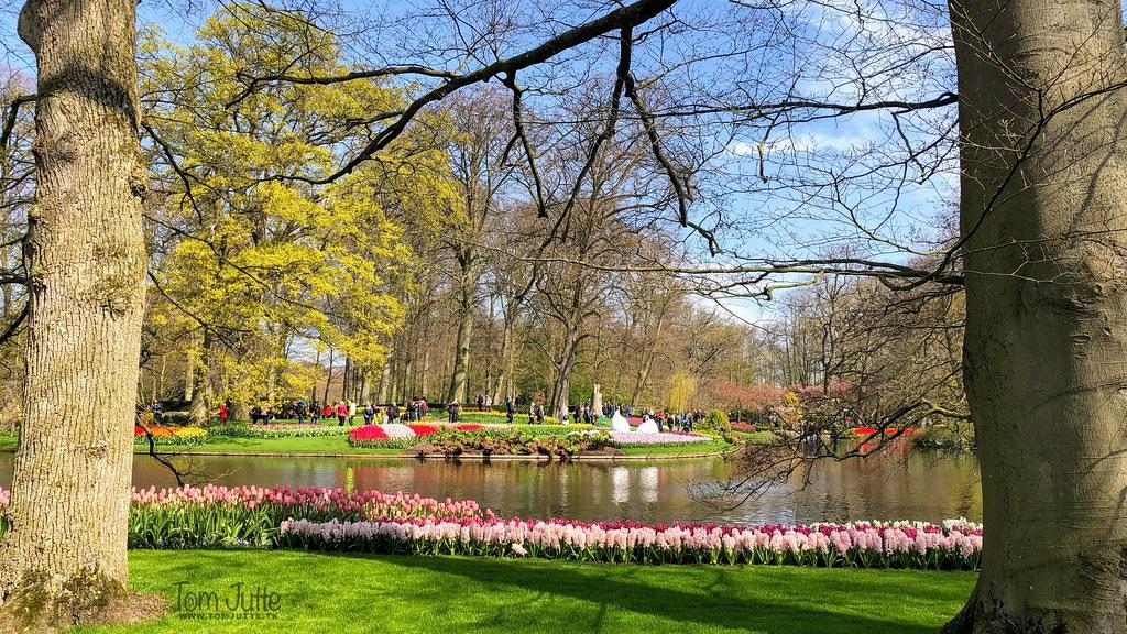 Keukenhof Gardens in better times, Netherlands - 2399