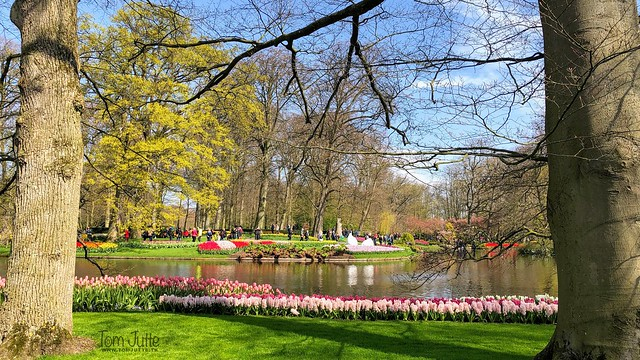 Keukenhof Gardens in better times, Netherlands - 2399