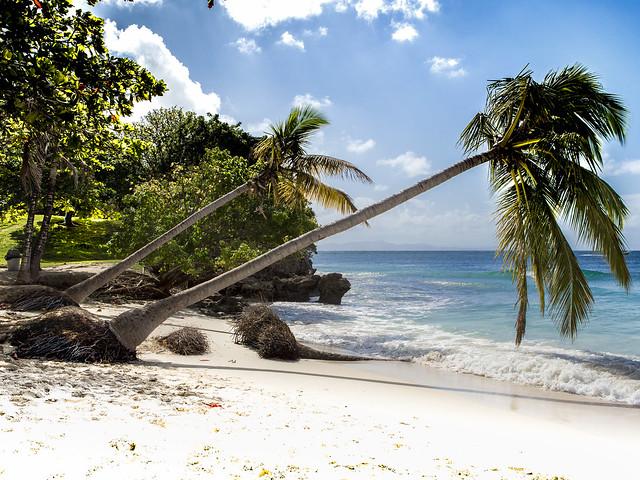 Palms [Samana]