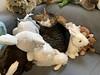 Amelia #cat amongst plushies