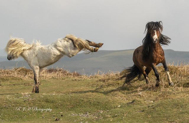 Pony;s 14
