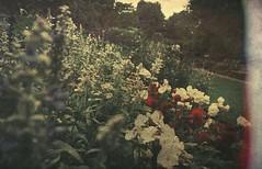 Plantation Garden, Norwich... vintage style edit.