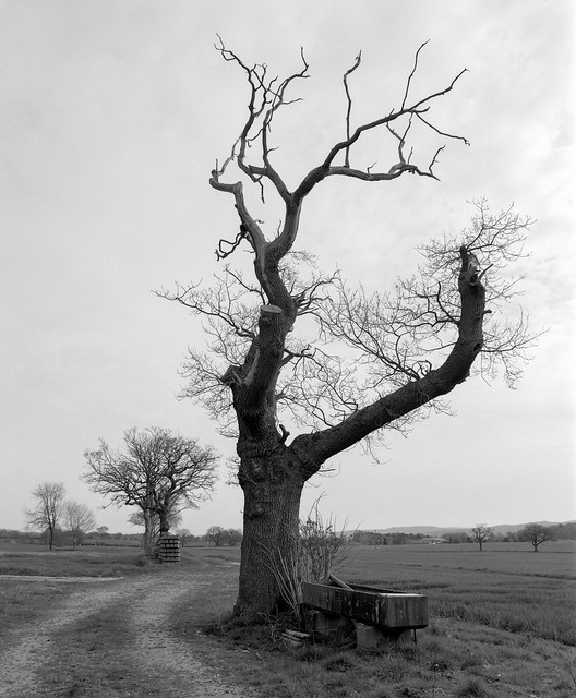 Day 108 (18th Apr) - Trees and Trough